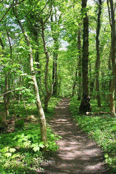 Erholsam und wunderschön, die Baaber Heide - Foto: InterDomizil Gmbh