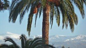 Granada Palme (© InterDomizil GmbH)