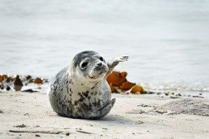 Das Wattenmeer: UNESCO-Weltnaturerbe vor der Haustür