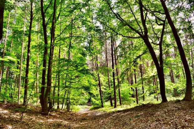 Waldweg - © Andreas-Hermsdorf / pixelio.de (rkn)