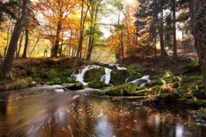 © Jenny Sturm - Fotolia.com