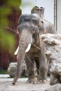 Städtetrip mit Kindern - Tierpark Hellabrunn - Elefantenanlage