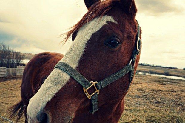 Das Glück dieser Erde liegt auf dem Rücken der Pferde - Foto: Pixabay, CC0