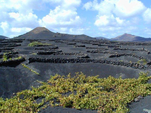 Weinanbau in kleinen Kratern, die vor dem Wind schützen / Copyright © Marion Hagedorn/Interdomizil