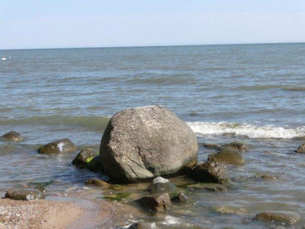 Welches Tier könnte das hier sein?<br /> (etwa in der Mitte der Baabe-Sellin-Strandstrecke - am besten zu sehen, wenn man<strong> von Baabe</strong> kommt) (© Julia S. Hentschel)