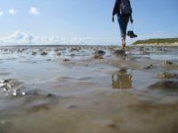 Juist – Spaziergang auf einer Gesäßbacke