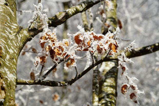 Buchenwälder m Winter erleben // Bild: Piabay (CC0)