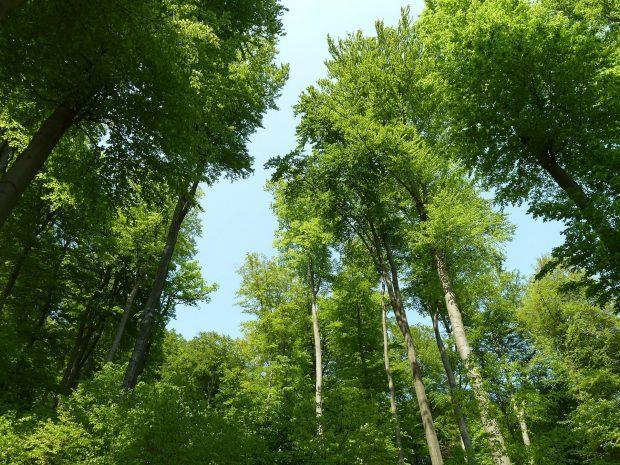 beech-wood-230992_1920