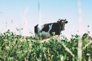 Inselgerechte Milchproduktionsstätte
