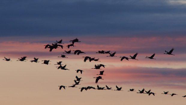 Die Glücksvögel am Himmel // Bild: Pixabay (CC0)