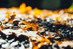 Städtereise im Herbst