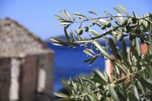 Typischer Anblick an der istrischen Adria // Bild: Pixabay (CCo)