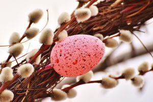 Es wird Frühling auf der Insel Rügen // Bild: Pixabay (CC0)