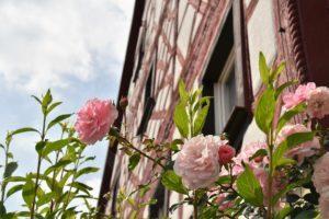 rose-2708672_1920