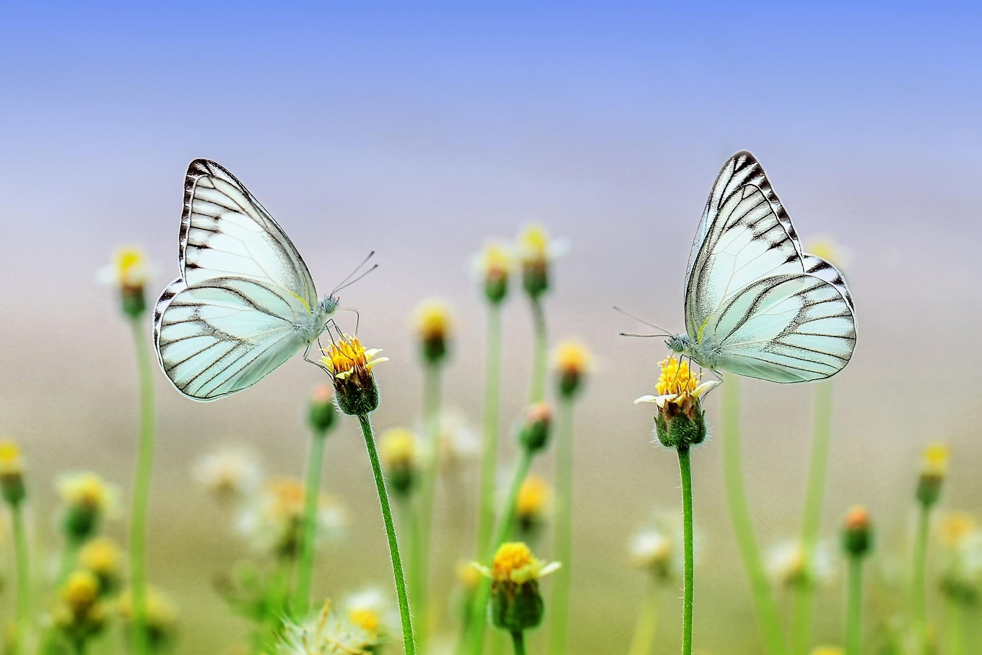 Auf dem Schmetterlingsweg