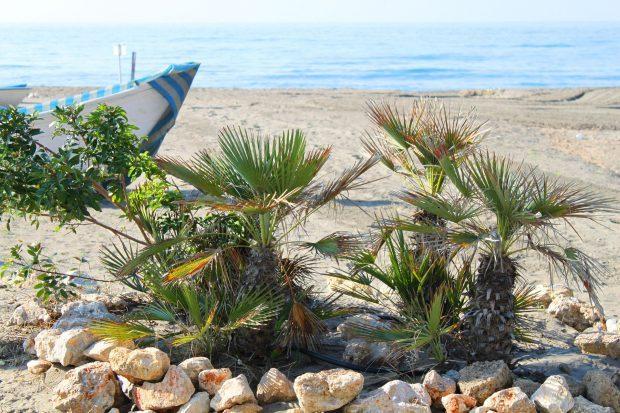 Typisch mediterrane Flora // Bild: Pixabay (CC0)