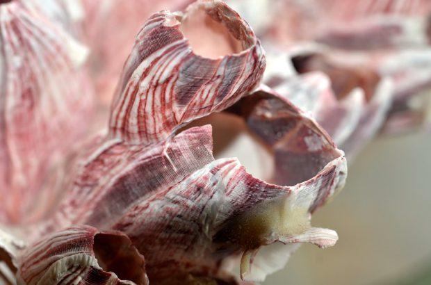 schön anzusehen - rosa Korall - Foto: Pixabay