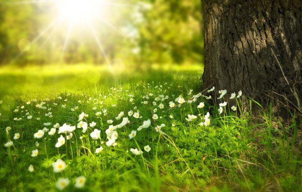 Es wird Frühling auf Juist // Bild: Pixabay (CC0)