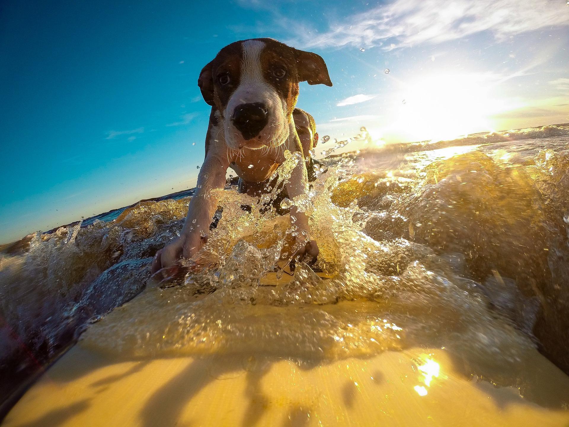 Urlaub mit Hund in FeWo