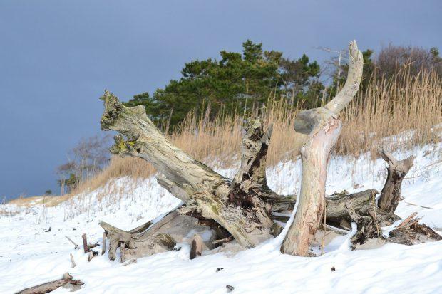 Schneebdeckter Ostseestrand - ein Anblick, der lohnt // Bild: Pixabay (CC0)